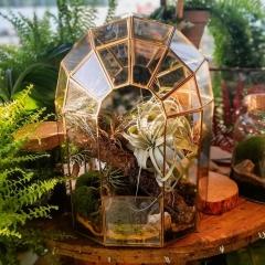Ogród w szkle z oplątwami