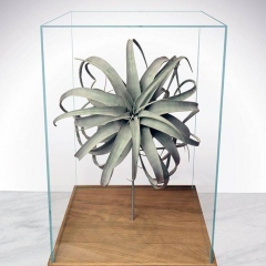 Nowoczesne terrarium z oplątwami