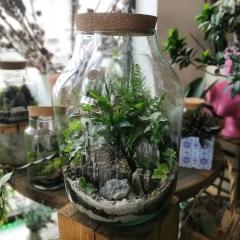 Ogród w szkle z paprociami