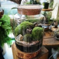 Ogród w szkle z mchem