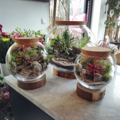 Ogrody w szkle sfery