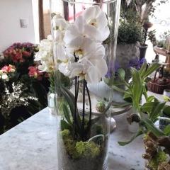 Ogród w szkle z orchideą