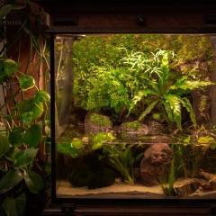 mossmoss terrarium