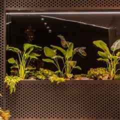 mossmoss rośliny